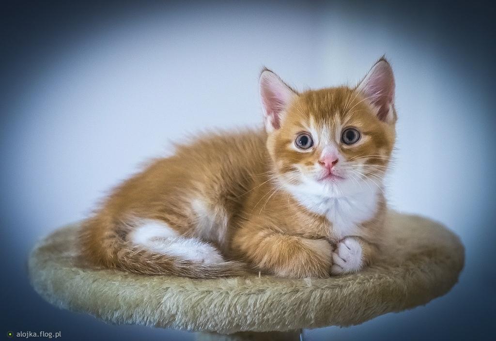 Koty .. kotki ...koteczki .. dziś wasze święto !!!!!!