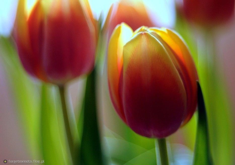 w oczekiwaniu na wiosnę ;-)