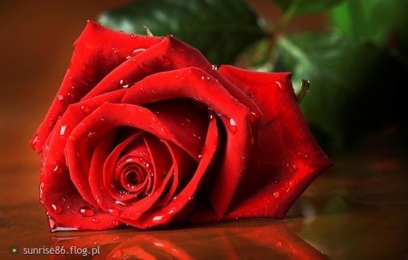 dostałam aż 30 nie tak dawno :-) zasuszone też są piękne w,wazonie - bo każda kobieta kocha kwiaty :-)