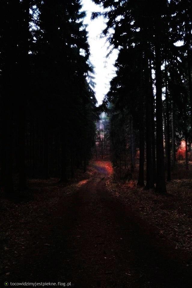 Idę wśród ludzi jak przez las jesienny...
