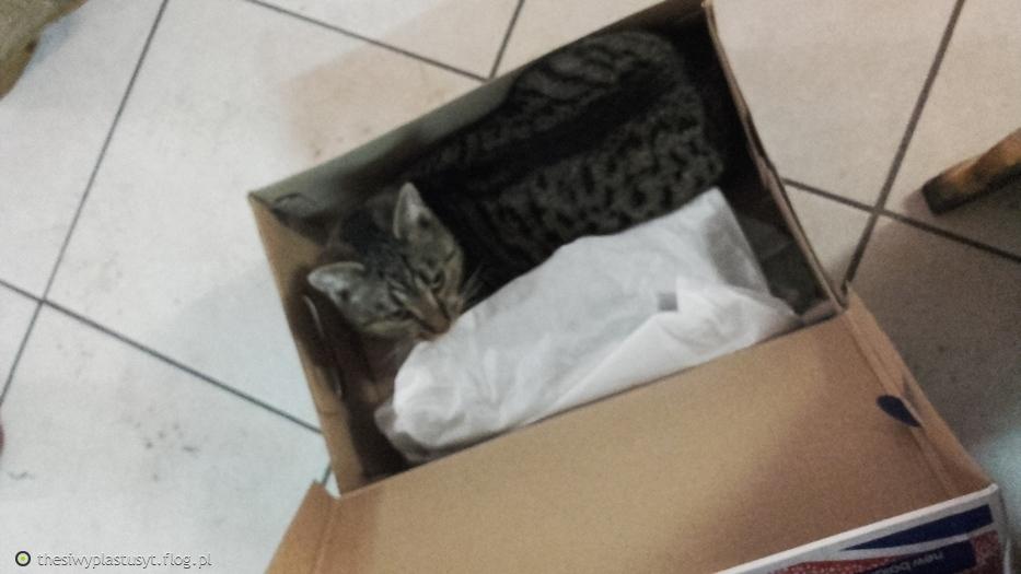 """Kot w """"butach"""""""