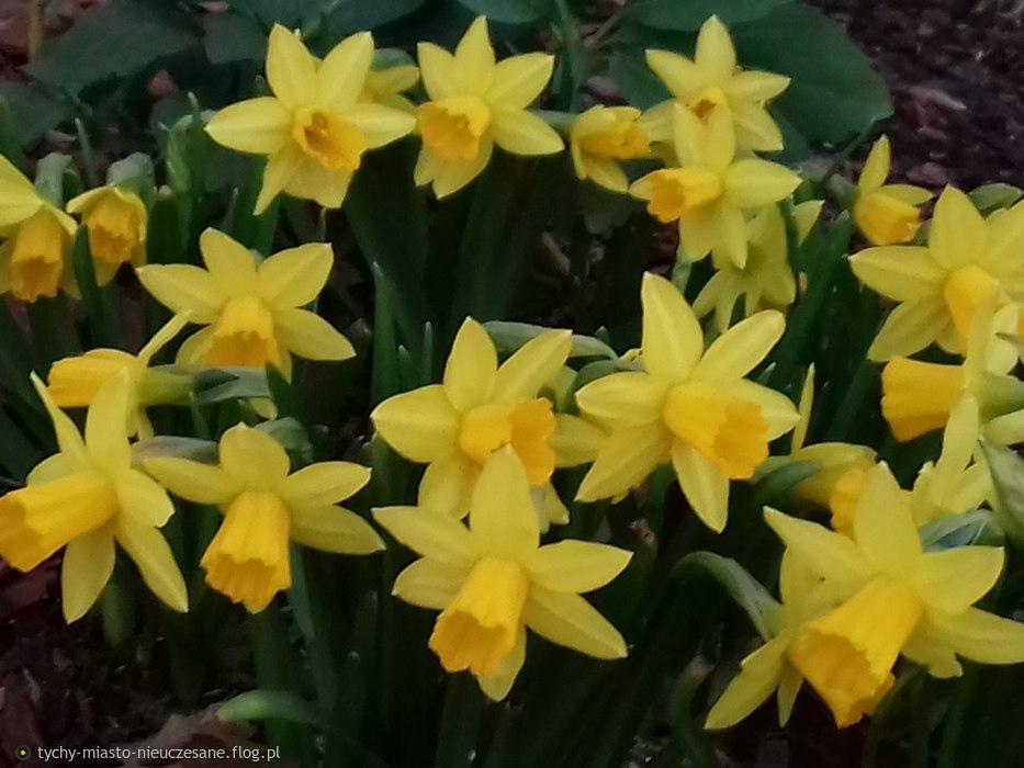 Tychy. Wiosna:)