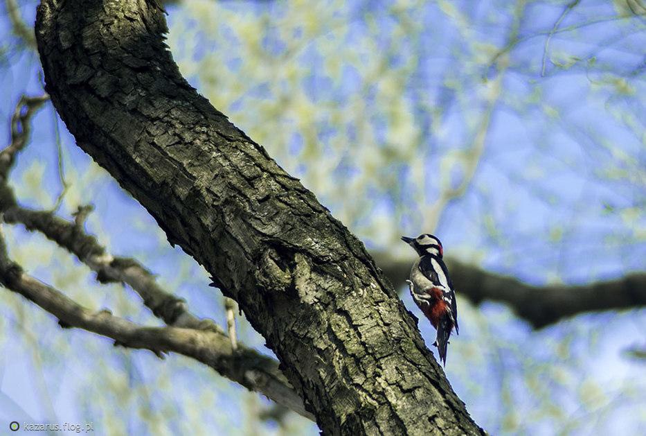 A tak w podskokach na czubek drzewa ;)
