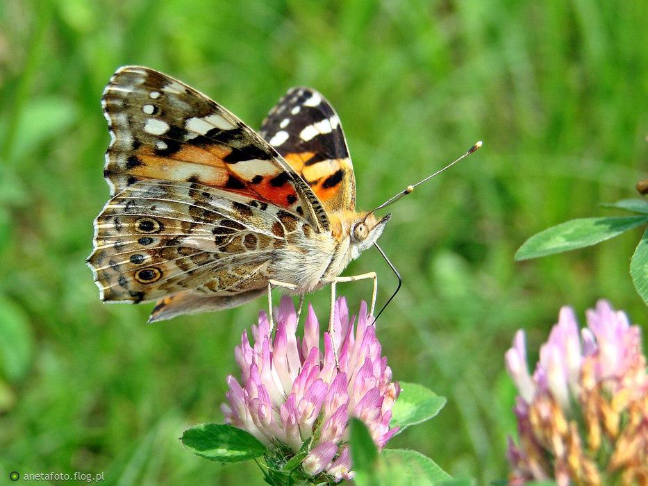 w podziekowaniu za miłą dedykację, ode mnie fotka na dobranoc ... by sny były kolorowe i lekkie jak motyl ;)