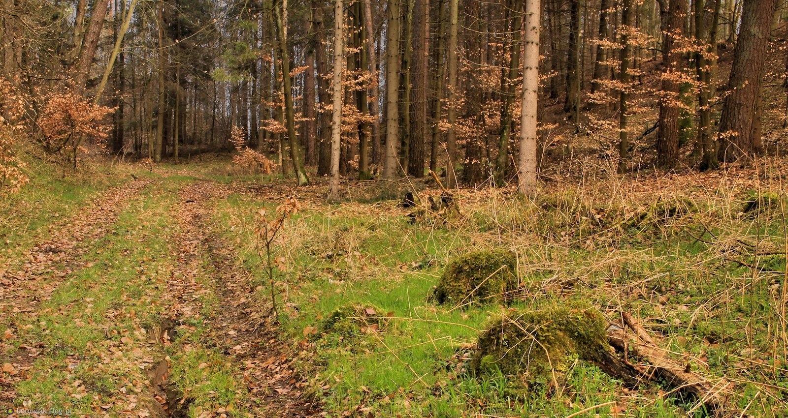 Tylko ziemia zielona i wiosennie radosna...
