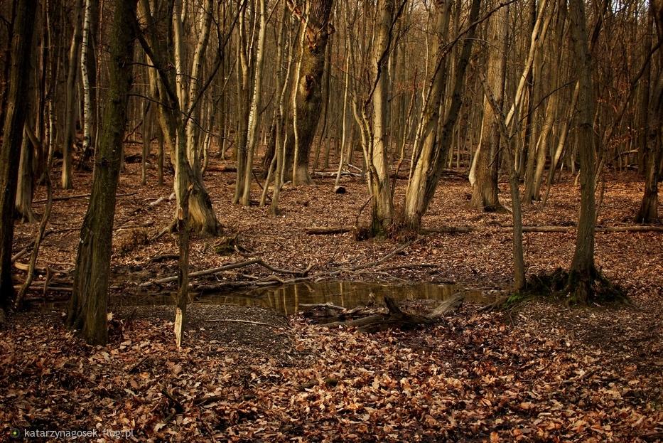W strasznym lesie