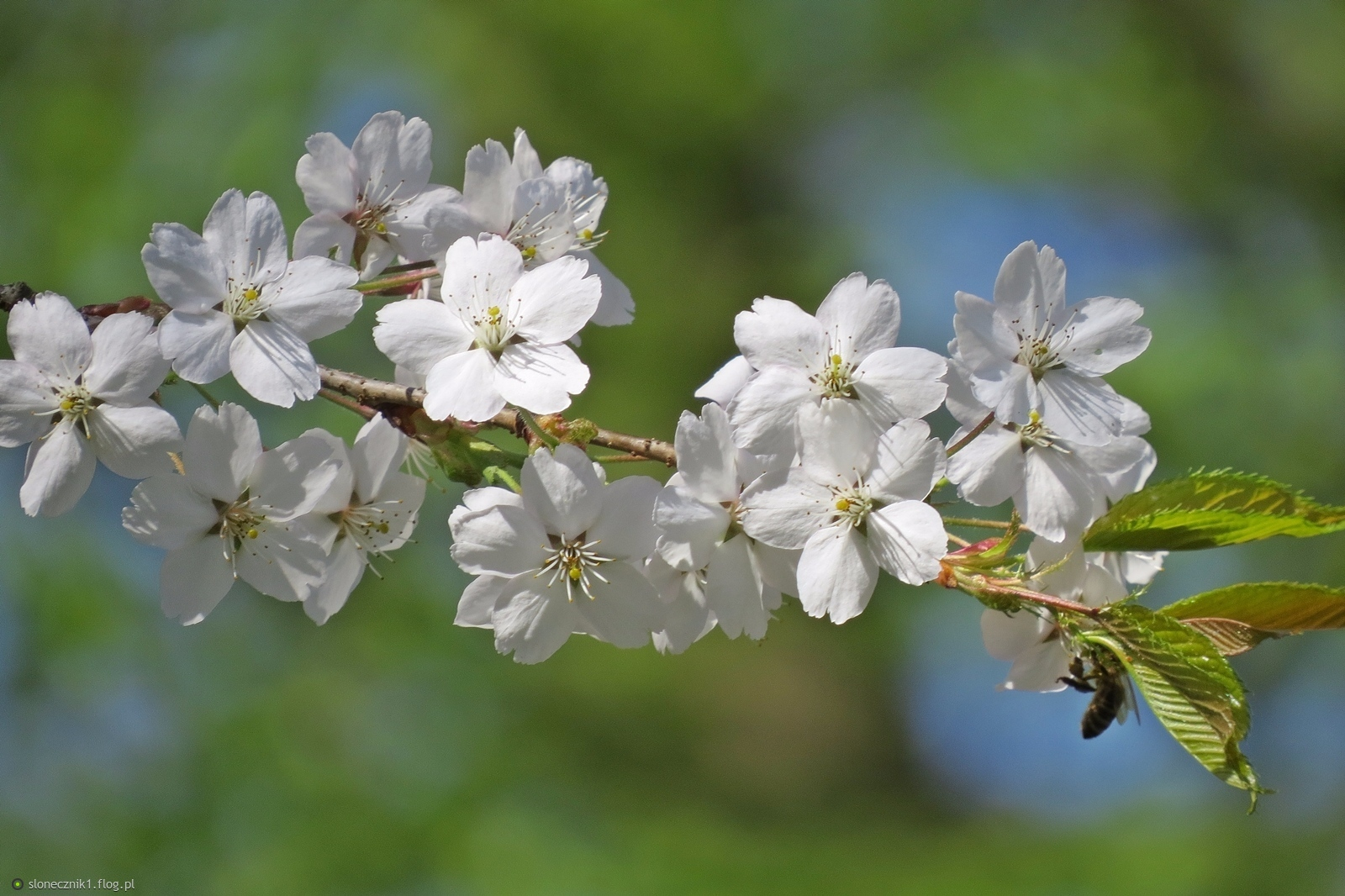 kwiatuszkowo