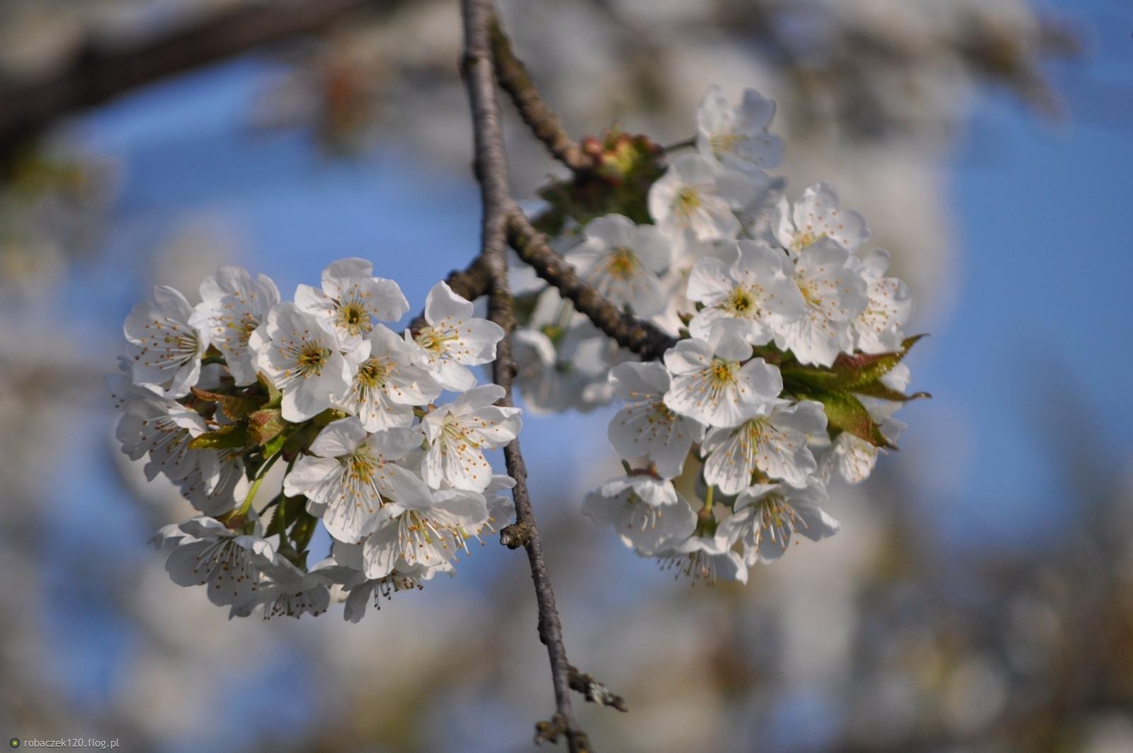 Gałązka wiosenna...