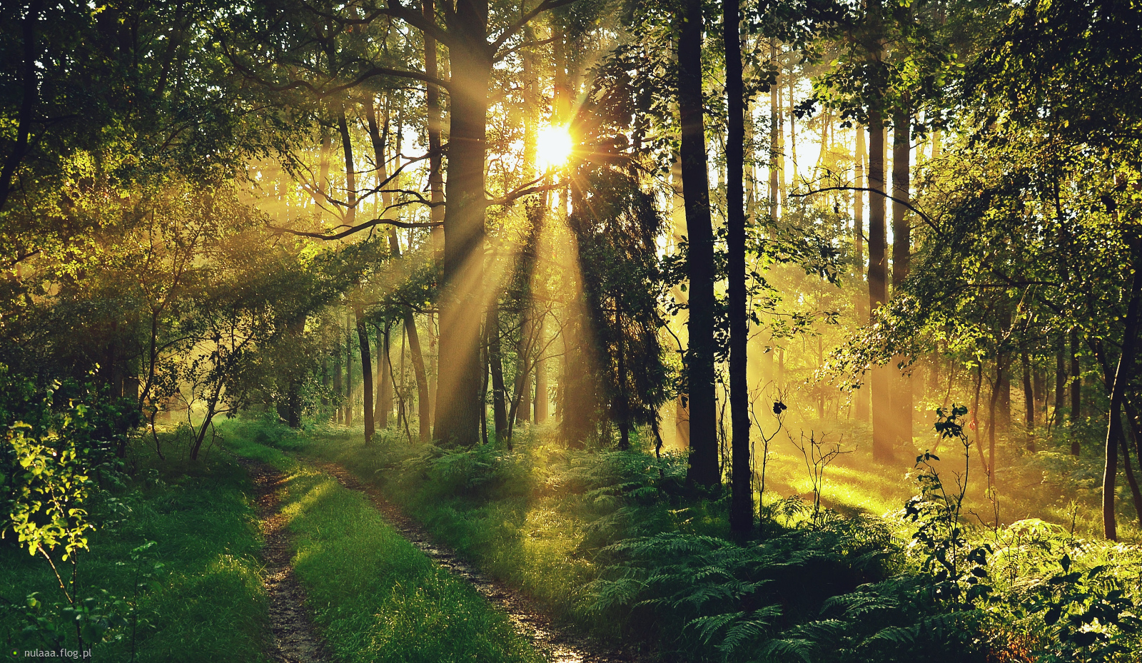 Dobrej Nocy a jutro pięknego dnia ze słonkiem:)