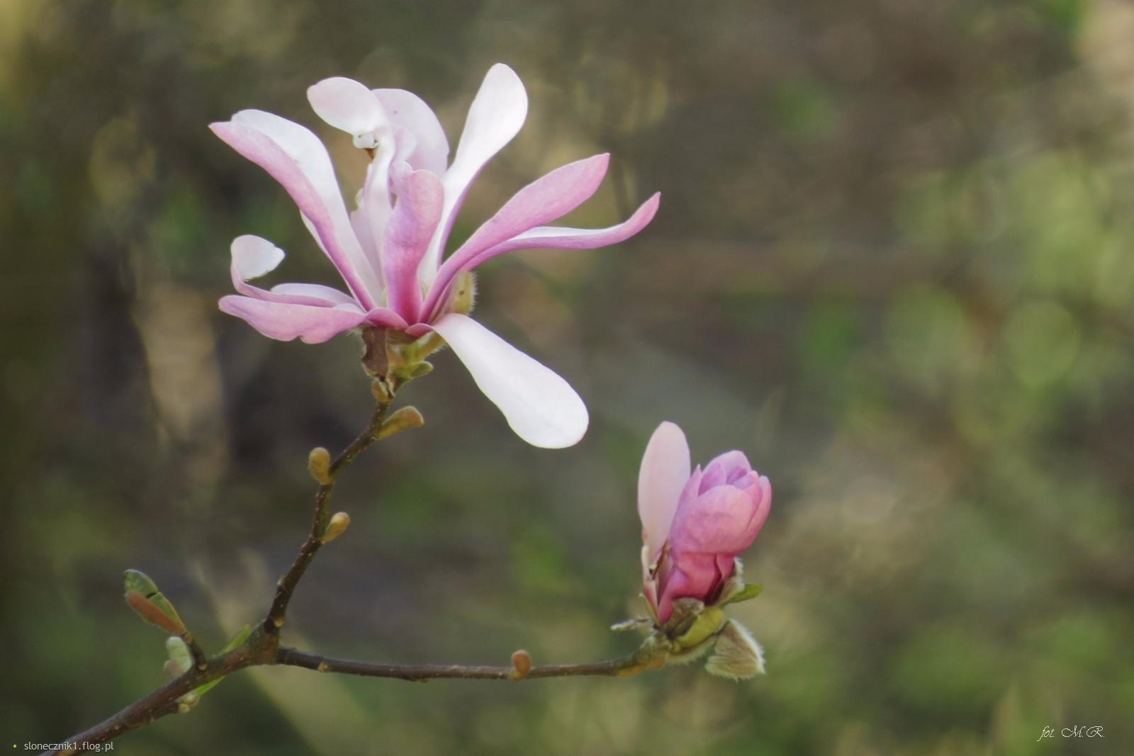 """""""Na liściu leży kwiat drzemiący ..."""""""
