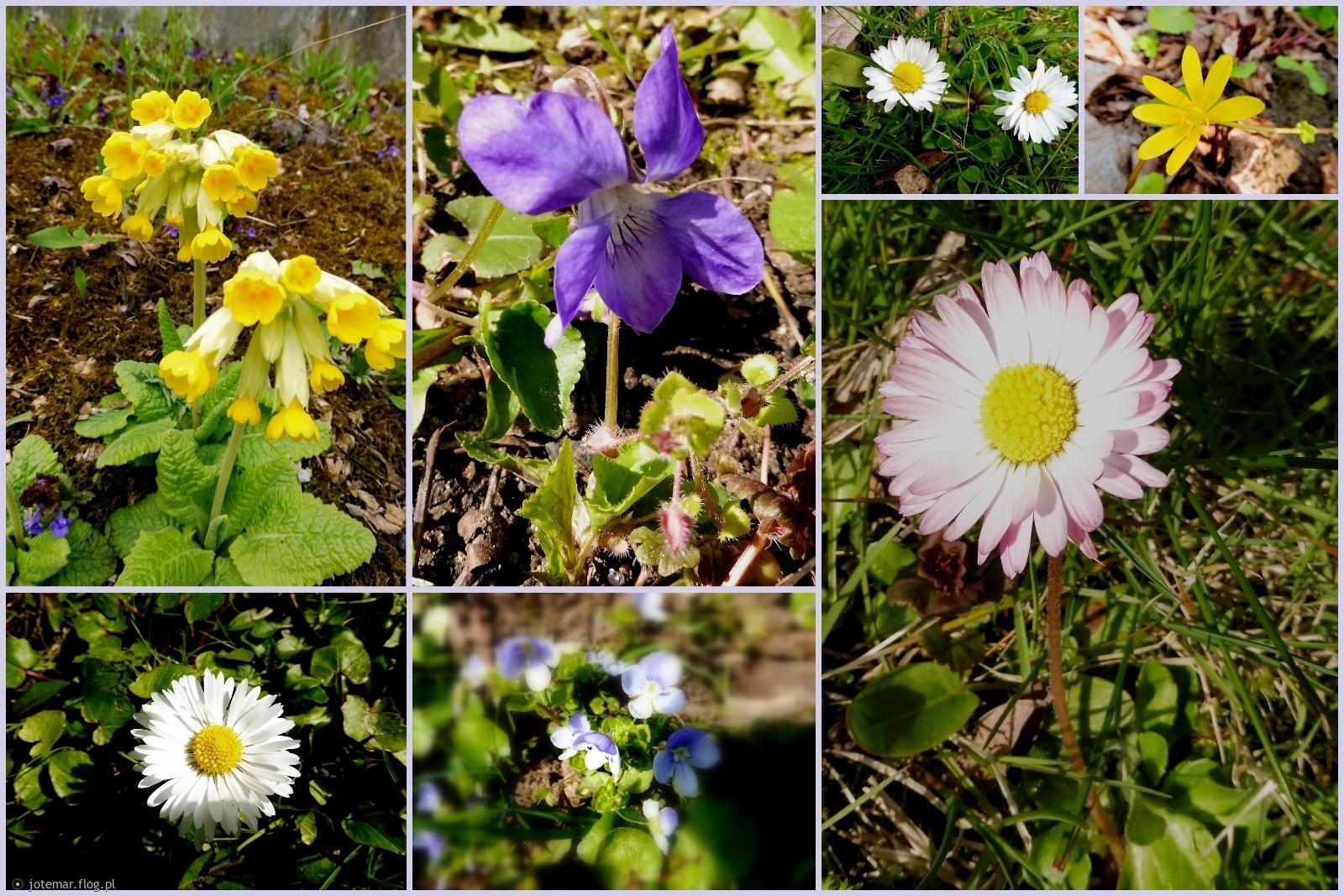 wiosna, wiosna...