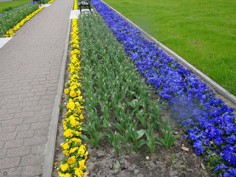 Chodnik kwiatowy