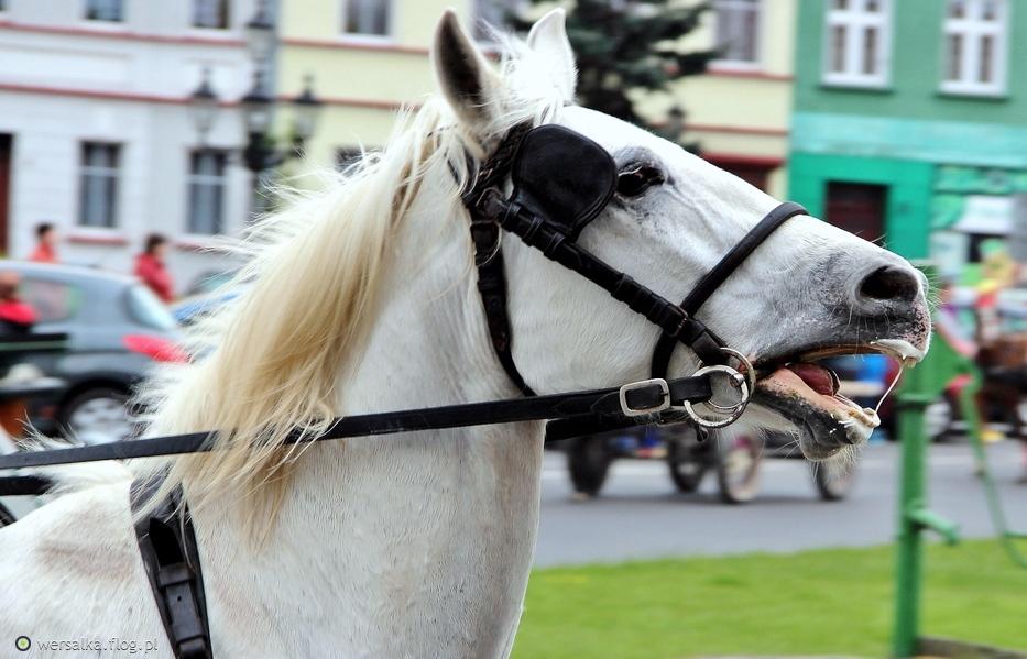 Koń pracujący