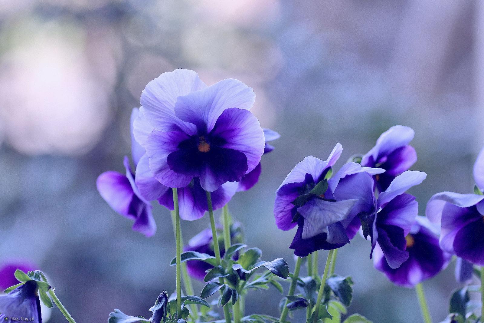 Życzę Wam pięknego, słonecznego tygodnia,,,, Pozdrawiam serdecznie,,