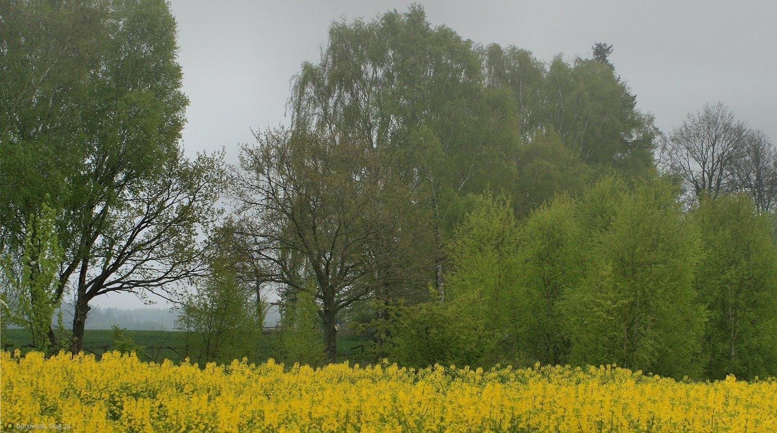 Rano mgła przez Kaszuby szła...