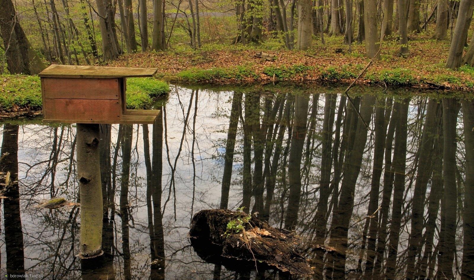 Mała retencja wodna w lasach...
