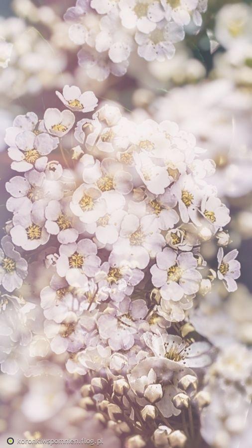 Jarku, moje wiosenne zamyślenie z Marzeniem Schumanna dla Ciebie w prezencie:)MARZENIE, SCHUMANN skrzypce i organy
