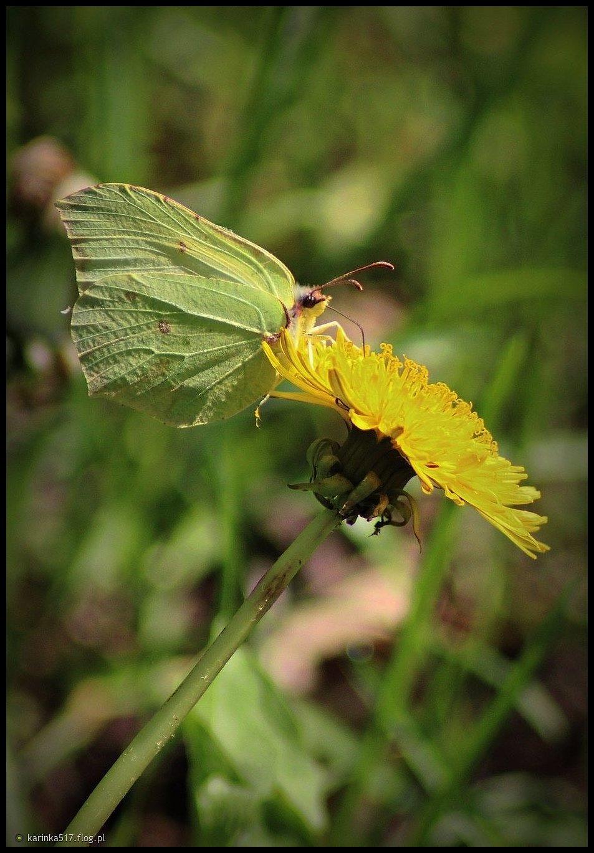 Szczęście jest jak motyl, czasem przeleci i zniknie w oddali, a czasem przysiądzie na chwilę, dając nadzieję na lepsze jutro...