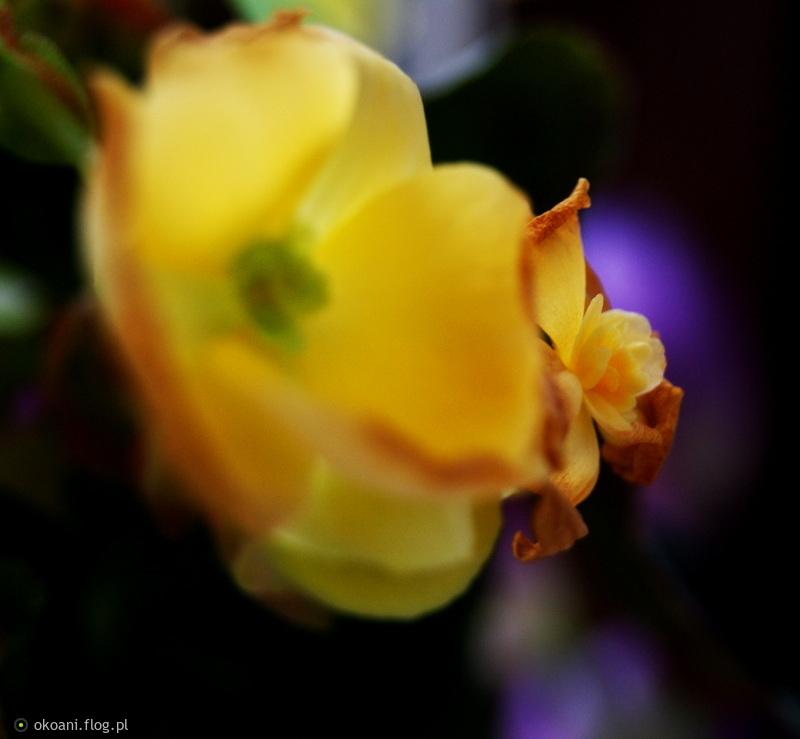 Bardzo Wam wszystkim dziękuje za Waszą obecność i ciepło pozdrawiam życząc Wam dobrej, spokojnej nocy :))