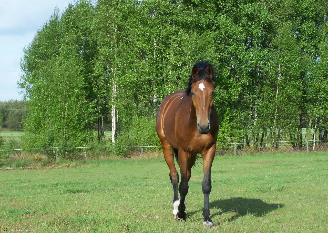 koń jaki jest każdy widzi :-)