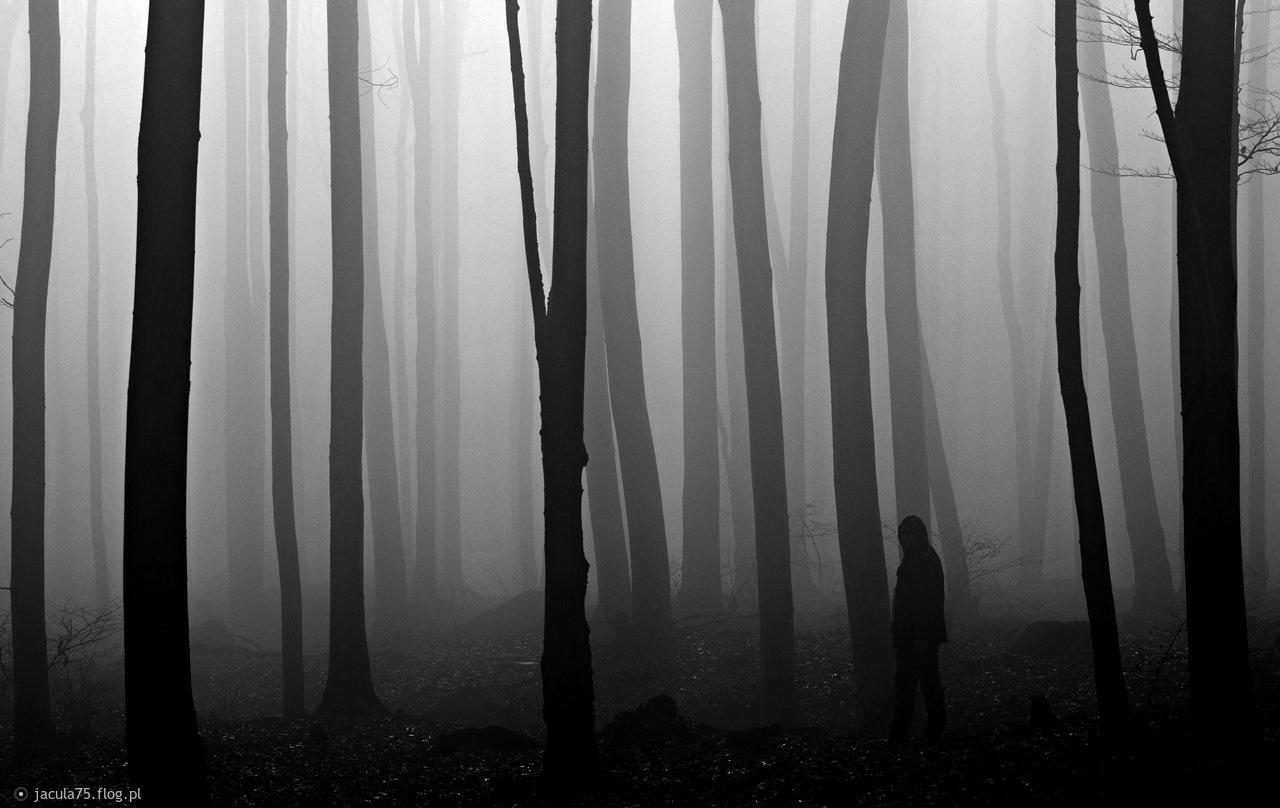Między duszami drzew