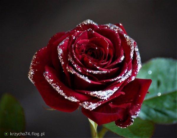 http://s22.flog.pl/media/foto_middle/11771840_wszystkiego-najlepszego-w-dniu-kobiet.jpg