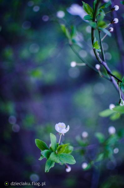 http://s22.flog.pl/media/foto_middle/11841470_zwiastuny-wiosny.jpg