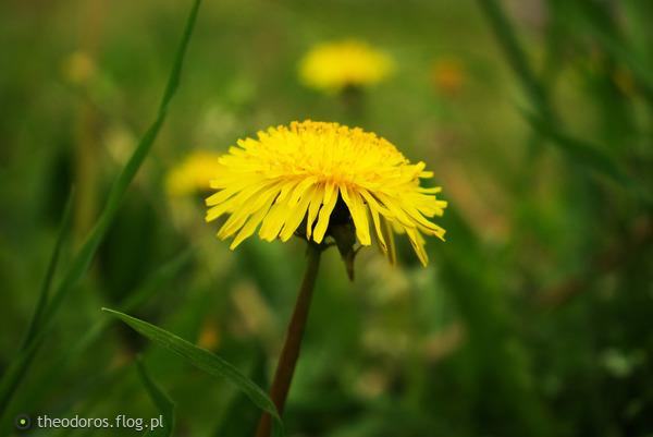 http://s22.flog.pl/media/foto_middle/11915607_kwiatek.jpg