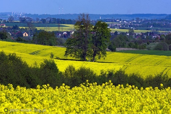 http://s22.flog.pl/media/foto_middle/11917666_krzeszowice-rudawa-na-horyzoncie-krakow-widziane-z-filipowic.jpg