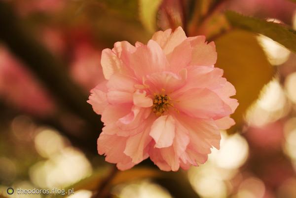 http://s22.flog.pl/media/foto_middle/11919615_kwiatek.jpg