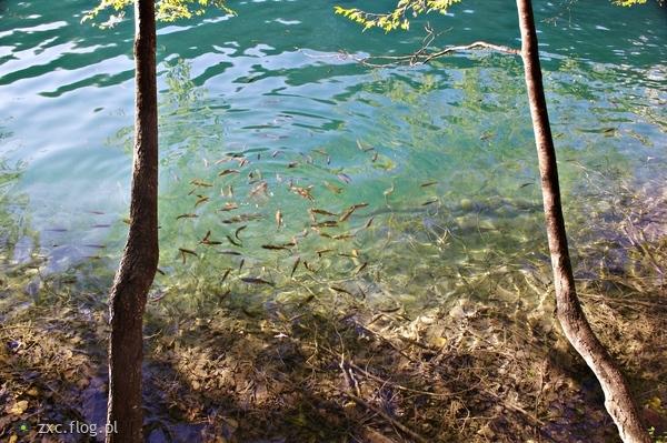 http://s22.flog.pl/media/foto_middle/11920360_chorwacja-park-narodowy-jezior-plitwickich-ryby-cz2.jpg