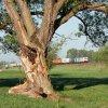 Spod drzewka