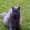 Miau , Miau  -  mamy dzis<br />iaj święto  :: W dniu kociego święta życ<br />zymy wszystkim kotom pełn<br />ych misek ,  a ich właści<br />cielom długich god