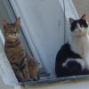 Z okazji dnia kota za okn<br />em słota wiosna za pasem <br />kot naszym ..............<br />zgadnijcie i napiszcie ?