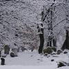 Białystok - cmentarz żyd<br />owski przy ulicy Wschodni<br />ej  ::   Jedyny ocalały cmentarz<br /> żydowski w Białymstoku z<br />ałożono ok. 1890 roku, po<br /> zamknięciu starego