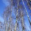 Wiosna zawitała w moje ok<br />olice:)Pozdrawiam serdecz<br />nie blogowiczów:))