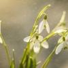 zwiastuny wiosny :-) :: Moja wiosna dla Ciebie z <br />podziękowaniem za dedykac<br />ję, komentarze i plusy :-<br />)