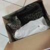 Kot w &quot;butach&quot; :: Pewnego razu przymierzają<br />c buty podszedł do mnie i<br /> do narzeczonej ten oto  <br />ten kot :) kot jest w s