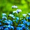 Oczekiwanie na wiosnę... ::  W życiu trzeba w końcu d<br />orosnąć,bo te własnie życ<br />ie czekać na Ciebie nie b<br />ędzie...     Mił