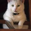 Zadumane Mleczko Cudne ..<br />. :: Po paru latach, jakie od <br />dnia stworzenia przeszły,<br /> dziś już jasno widać, że<br /> Panu Bogu poza kota