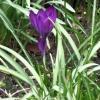 Zamknę najszczelniej serc<br />e przed śpiewem słowika. <br />I pójdę przez gąszcz kwit<br />nień, rozkwitów, kwiatów.<br />.. - Maria Pawlikowska-Ja<br />snorzewska