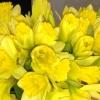 Wiosna, wiosna.....ach to<br /> TY :)) Dorotko jest Twoj<br />a.....dziekuje :))
