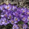 moja wiosna dla wszystkic<br />h na fotoblogu     ❤️☀️☘<br /> ☀️☘❤️