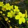 W deszczu maleńkich żółty<br />ch kwiatów...