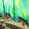 Młode dinozaury ?  :: Dominikana