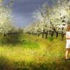 Pewnej wiosny w ogrodzie