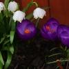 Zwiastuny wiosny dla Was <br />na powitanie