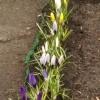 Wiosna przyszła niespodzi<br />anie :) Dla Ciebie Gosiu,<br /> miło , ze jestes tu:))