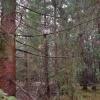 Zdjęcie z telefonu - Sóweczka :: EXIF: Przysłona: f/1.7 Ogniskowa: 4.2mm Naświetlanie: 1/50 ISO: 64