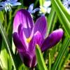 Powiew wiosny:)